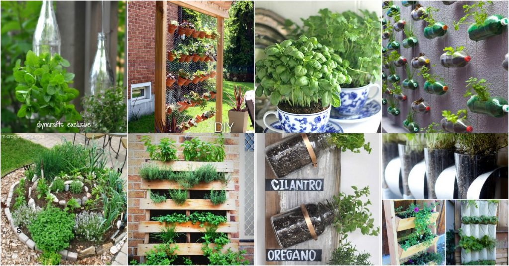 One popular outdoor living idea in Southern California is planting an herb garden.